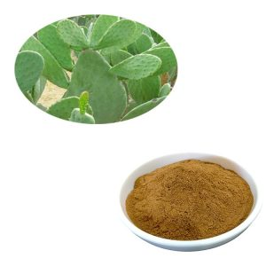 Opuntia Extract Powder 10:1 TLC