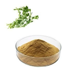 Bacopa Monniera Bacosides 50% UV