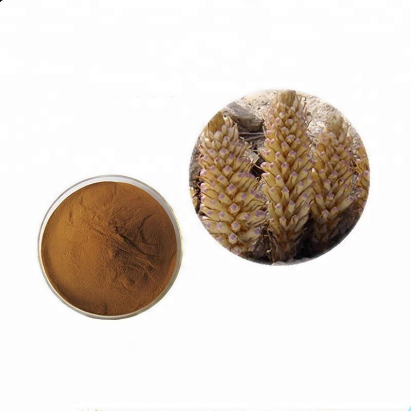 Cistanche Tubulosa Extract 10:1 TLC