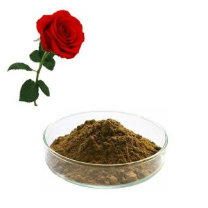 Rose Extract 10:1 TLC