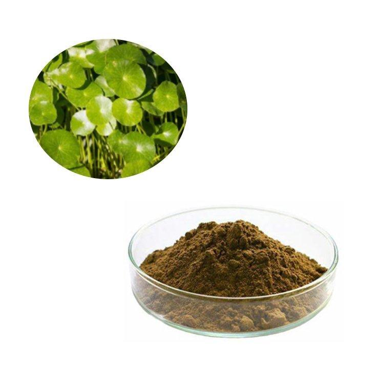 Gotu Kola Extract Asiaticosides 10% HPLC