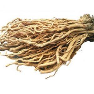 Isatis Root Extract 10:1 TLC