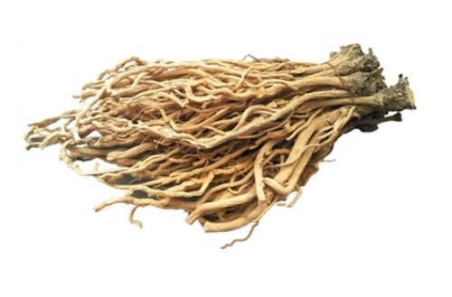 Isatis Root Straight Powder TLC
