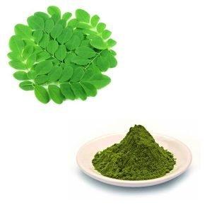 Moringa Leaf Straight Powder TLC