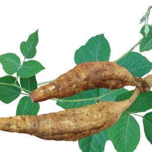 Kudzu Root Straight Powder TLC