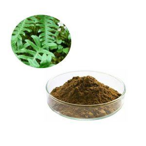 Polypodiodes Niponica Extract 10:1 TLC