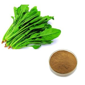 Spinach Extract 10:1 TLC
