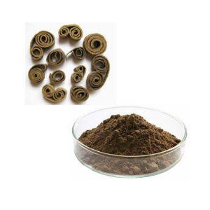 Magnolia Extract Honokiol 2% HPLC