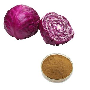 Red Cabbage Extract 10:1 TLC