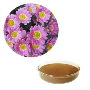 Purple Chrysanthemum Extract 10:1 TLC