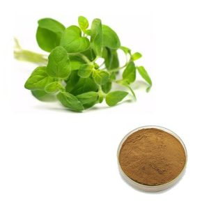 Oregano Leaf Straight Powder TLC