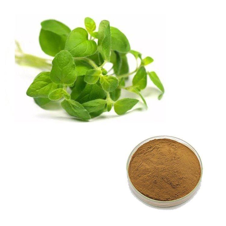 Oregano Leaf Straight Powder TLC