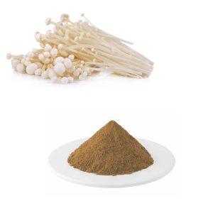 Needle Mushroom Extract Polysaccharides 30% UV