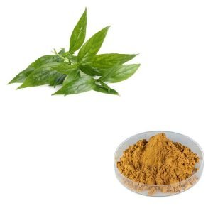 Andrographis Paniculata Extract 10:1 TLC
