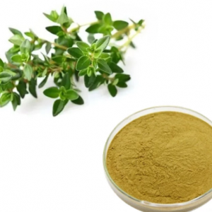 Thyme Extract 10:1 TLC