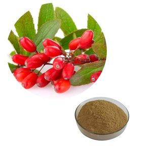 Barberry Extract 10:1 TLC