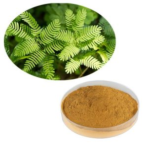 Mimosa Pudica Extract 10:1 TLC