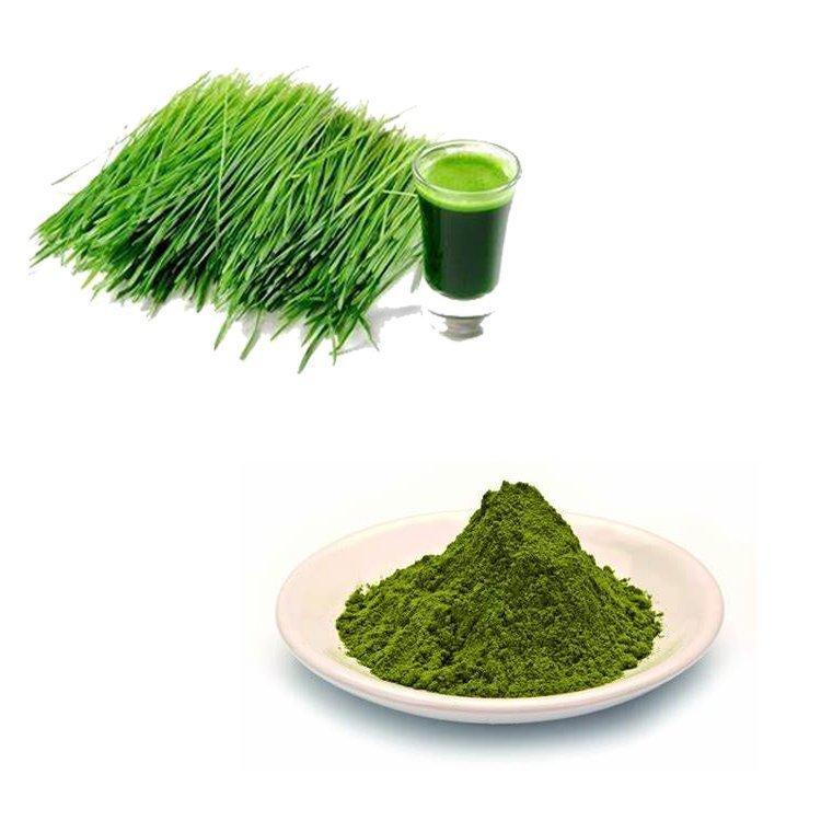 Barley Grass Powder 80Mesh TLC