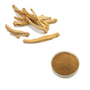 Codonopsis Root Extract 10:1 TLC