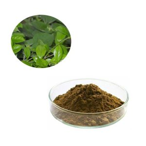 Gymnema Sylvestre Extract Gymnemic acids 75% Gravity