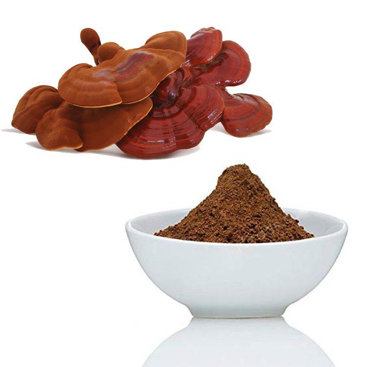 Reishi Mushroom Extract 60% Polysaccharide UV