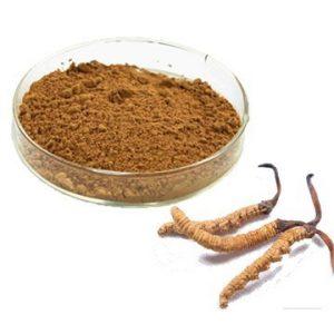 Cordyceps Sinensis Extract Polysaccharide 50% UV