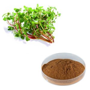 Portulaca Oleracea Extract 10:1 TLC