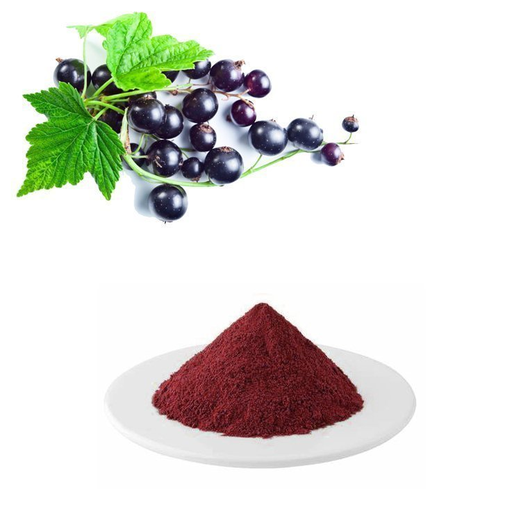 Black Currant Extract 25% Anthocyanins UV