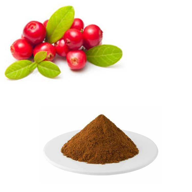 Cranberry Extract 25% Proanthocyanidins HPLC