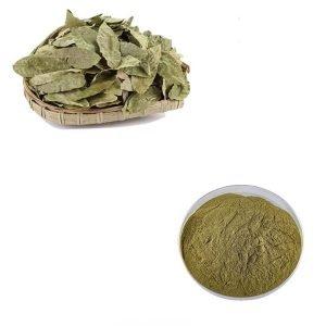 Senna Leaf Straight Powder TLC