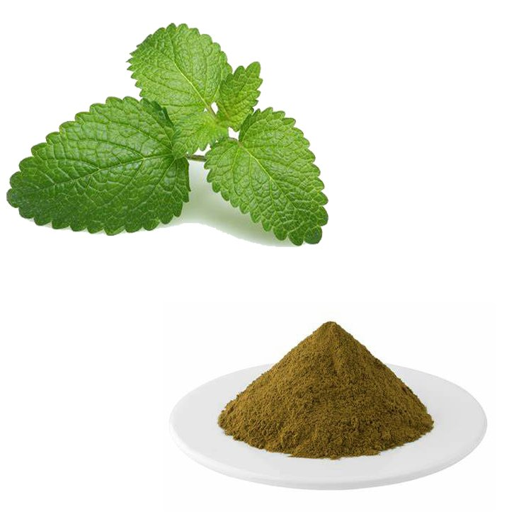 Lemon Balm Extract 10:1 TLC