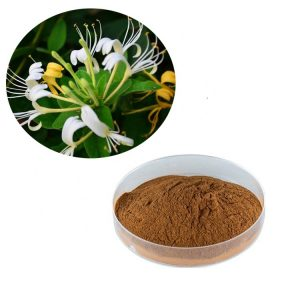 Honeysuckle Extract Straight Powder TLC