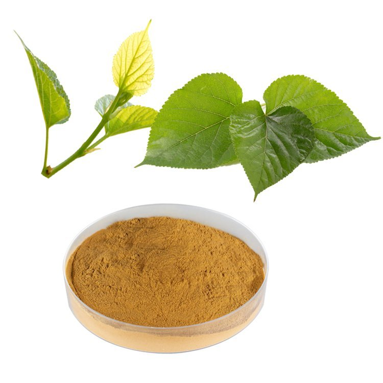 Mulberry Leaf Extract Flavonoids 3% UV