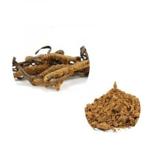 Cordyceps Extract Powder Cordyceps Acid 7% HPLC
