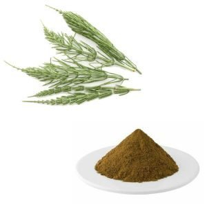 Horsetail Extract 10:1 TLC