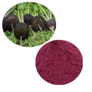 Black Radish Extract 10:1 TLC