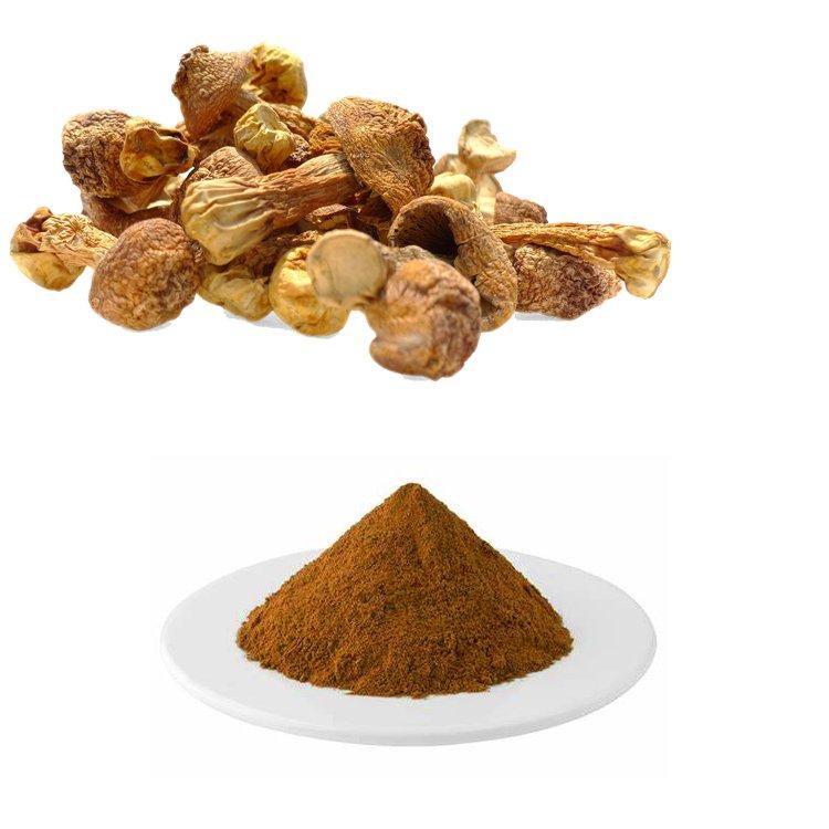 Agaricus Blazei Mushroom Extract 10:1 TLC