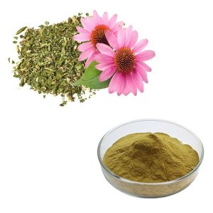 Echinacea Extract Chicoric Acid 4% HPLC