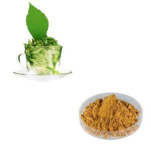 Spearmint Leaf Straight Powder TLC