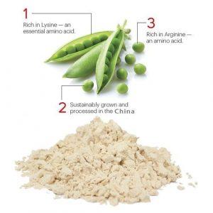 Pea Protein Powder General 80% HPLC