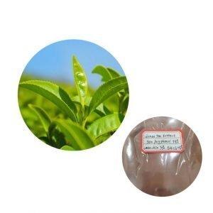 Green tea Extract 98% tea polyphenol UV, catechin 70% HPLC, EGCG 45% HPLC